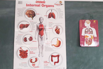 best school kompally Hyderabad EVS activity on Internal Organs 1