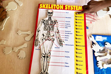 students learning about Skeleton system 1